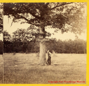 Photograph of Carillon battlefield marked by a wooden sign nailed to a tree