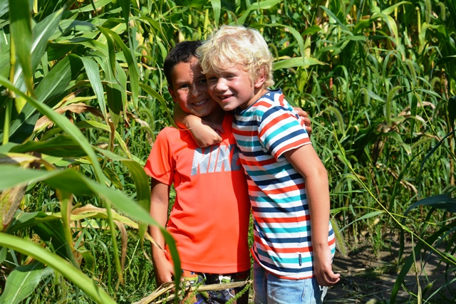 Two boys with arms around on shoulders, in corn maze