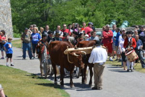 Crowd watching cows pull cart