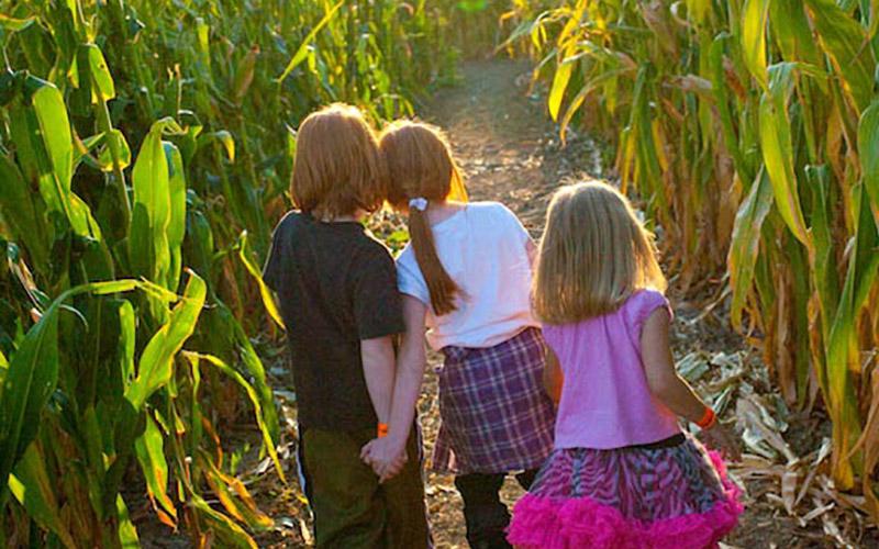Kids in corn maze