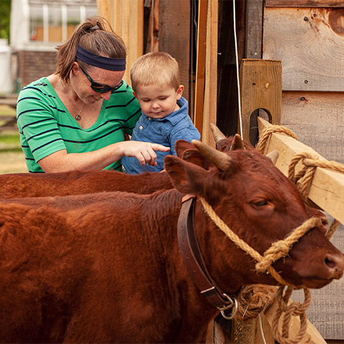 http://Woman%20and%20little%20boy%20looking%20at%20cows