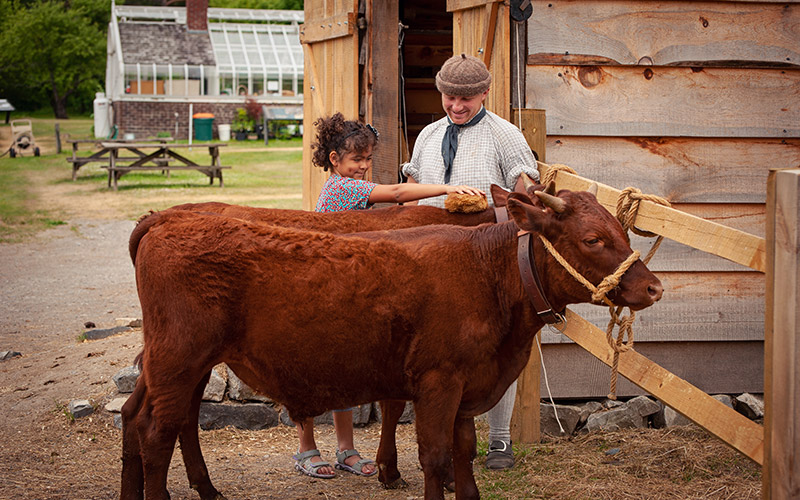 Re-enactor and child brushing cow