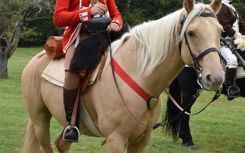 orwell light horse