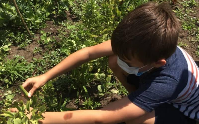 kid working in garden
