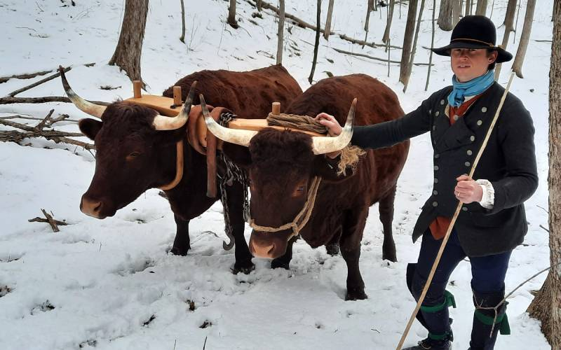 interpreter with oxen
