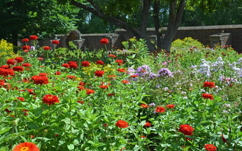 view of flowers in King's Garden